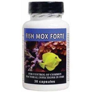 fishmoxforte-30_1